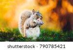 Beautiful Squirrel On Yellow...