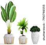 3d illustration of tropical... | Shutterstock . vector #790798555