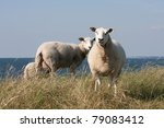 Grazing Sheep With Behind Them...