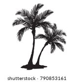 quality detailed tropical palm... | Shutterstock .eps vector #790853161
