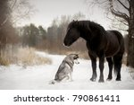 cute horse with a dog in winter ...