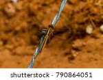 Dragonfly On Wire