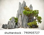 Chinese Bonsai  Located In...
