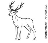 standing deer isolated on white ... | Shutterstock .eps vector #790935361
