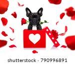 french bulldog dog in love for... | Shutterstock . vector #790996891