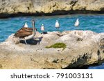 A Group Of Seagulls And A...