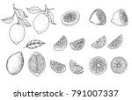 hand drawn sketch style citrus... | Shutterstock .eps vector #791007337