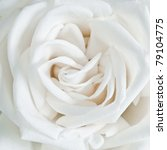 Stock photo white rose petals close up 79104775
