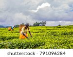 2017 sept 5 nandi hills  kenya. ... | Shutterstock . vector #791096284