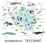 antarctic  antarctica   flora... | Shutterstock .eps vector #791128987