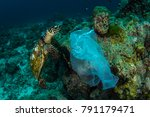 sea turtle and plastic bag... | Shutterstock . vector #791179471