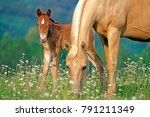 mare and foal together in...