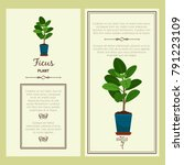 greeting card with ficus... | Shutterstock .eps vector #791223109