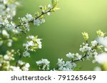 beautiful floral spring... | Shutterstock . vector #791265649