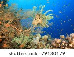 lionfish and gorgonian fan... | Shutterstock . vector #79130179