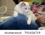 beautiful kitten at the cat... | Shutterstock . vector #791426719