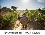 kruger park  limpopo  south... | Shutterstock . vector #791443201