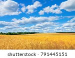rural scenic landscape with ...   Shutterstock . vector #791445151