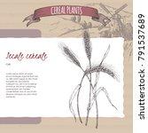 rye aka secale cereale sketch... | Shutterstock .eps vector #791537689