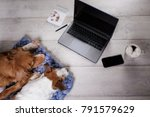 two dogs using the laptop and... | Shutterstock . vector #791579629