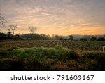 farm field in the rural area...   Shutterstock . vector #791603167