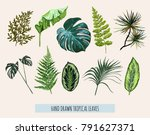 beautiful hand drawn  botanical ... | Shutterstock .eps vector #791627371