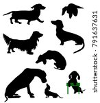 Stock vector silhouettes of dachshunds vector illustration 791637631
