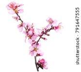 season of flowering almonds ... | Shutterstock . vector #791647555