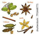 herbs  condiments and spices....   Shutterstock .eps vector #791668771