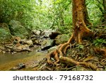 Big Tree Roots And River In...