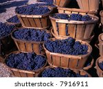 Blue grapes after the harvest in wedge baskets - stock photo