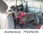 black staffordshire bull... | Shutterstock . vector #791696254