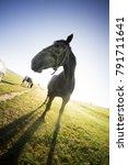Small photo of horses, foal, mare, stallion ona pasture