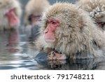 a wild monkey entering an... | Shutterstock . vector #791748211