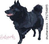 small black dog schipperke... | Shutterstock .eps vector #791754895