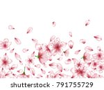 delicate apricot or japanese... | Shutterstock .eps vector #791755729
