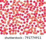rose petals falling windy... | Shutterstock .eps vector #791774911