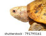 high resolution close up macro... | Shutterstock . vector #791795161