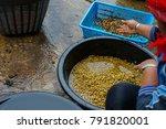 chiang rai  thailand   january... | Shutterstock . vector #791820001