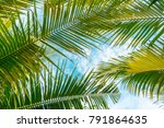 uprisen angle view of coconut... | Shutterstock . vector #791864635