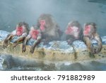 Close Up Lovely Monkeys In...
