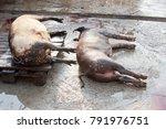 asf. african swine fever. in... | Shutterstock . vector #791976751