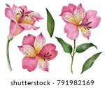 Stock photo watercolor set of flowers hand drawn illustration of alstroemeria bright floral elements isolated 791982169
