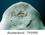 Flounder Portrait