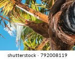 Stem Of A Palm Tree With Dry...