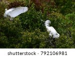 White Heron And A Royal...