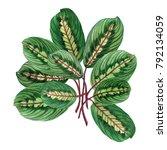 watercolor painting green... | Shutterstock . vector #792134059