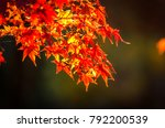 maple tree in autumn beautiful... | Shutterstock . vector #792200539