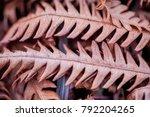 Frozen Ferns In Winter  Macro