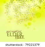 Beautiful spring blossom of elder flowers background with defocused lights - stock photo